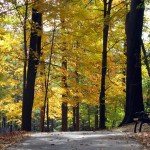 Oglebay Walking Trail_fall